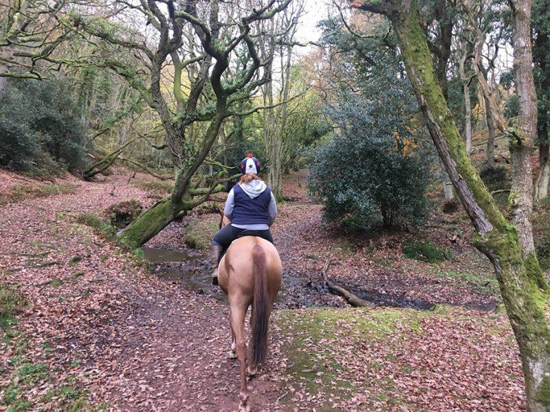 Horse Riding in Quantock Hills 1